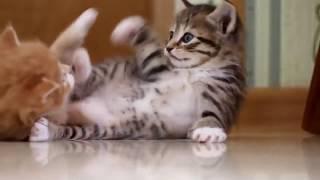 Смешные кошки  2018  Боевые котята и милые котики
