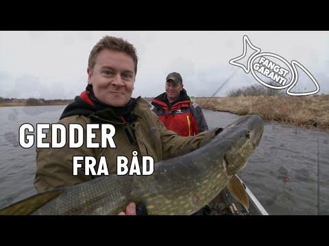 Geddefiskeri med Fangstgaranti