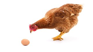 Как на душе не клевали яйца