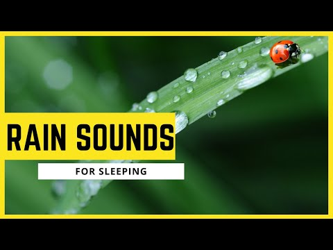 Rain Sounds For Sleeping l Rain Sounds For Studying l Rain Sound For Sleeping