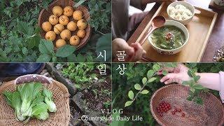 SUB) 시골 아침 루틴. 떨어진 살구 줍줍. 청경채 된장국 집밥과 앵두 주스 🍒
