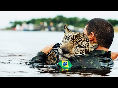 Amazing Animal Rescues Compilation - Real Life Heroes 2018