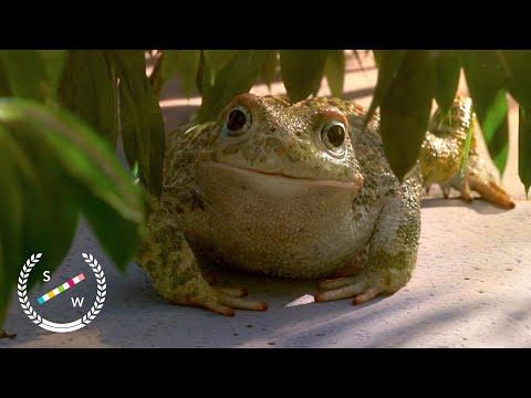 Garden Party | Oscar Nominated CG Animation | Short of the Week