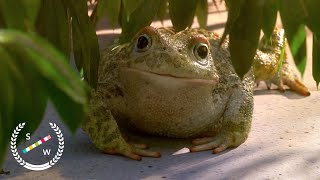 Garden Party | Oscar Nominated CG Animation | Short of the Week