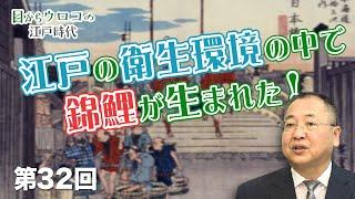 第32回 江戸の衛生環境の中で錦鯉が生まれた!