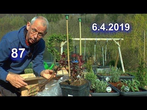 Kräuter Hochbeet bepflanzen / Edel Rosen von Amazon begutachten und einpflanzen