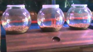 preview picture of video 'Fancy Aquarium for sale in Karachi'