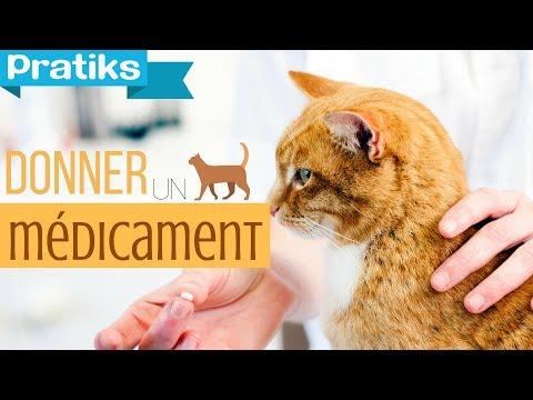 26 me jour comment donner le vermifuge son chat mon - A quel age couper les griffes d un chaton ...