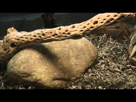 Pangani Forest Exploration Trail®