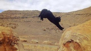 Коты альпинисты