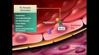 Renin Angiotensin Aldosterone System - Mechanism