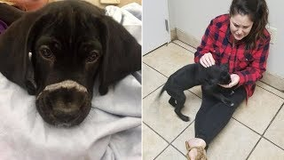 Abandoned Puppy Discovered With His Mouth SEALED Shut And Left For Dead Finds Forever Home
