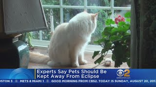 Keeping Your Furry Friends Safe During Monday