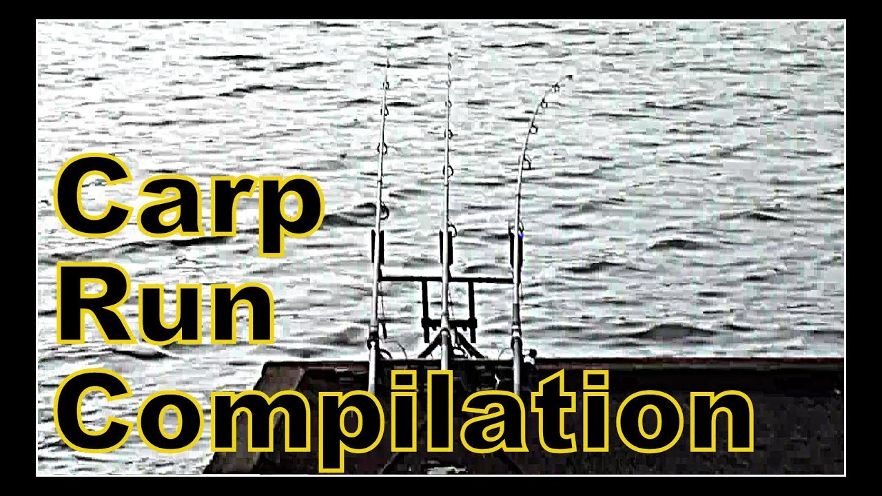 Carp Run Compilation