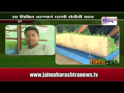 Hydroponic grass for goats , junnar goat farm ,Pune ,Maharashtra,India  news on jai maharashtra news