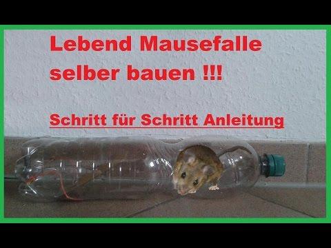 DIY Mausefalle & Rattenfalle aus Flasche bauen / Lebendfalle - Mäusefalle selber machen / Anleitung
