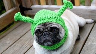Приколы / Животные: Подборка лучших и смешных моментов с животными