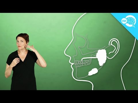 Download How Does Saliva Work? HD Mp4 3GP Video and MP3