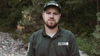 Emerald Ash Borer Treatment in Minnesota