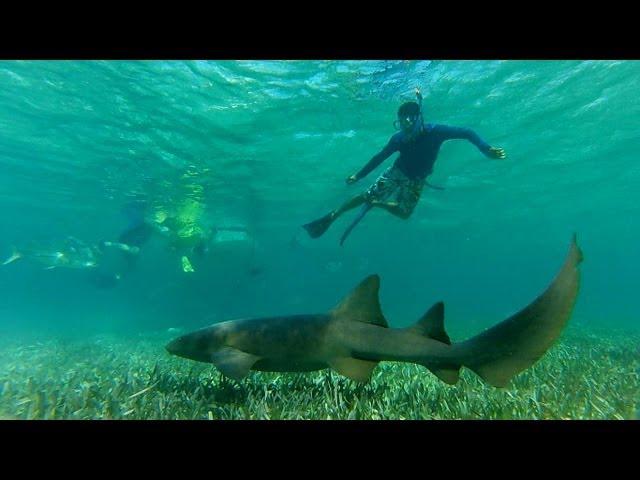 Snorkeling! Gopro Hero 3 Silver [UNDERWATER]
