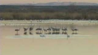 The Birds of Bosque del Apache