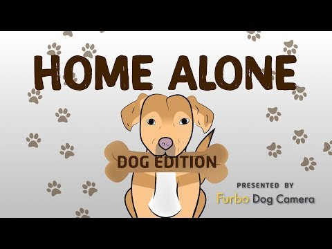 Home Alone: Dog Edition