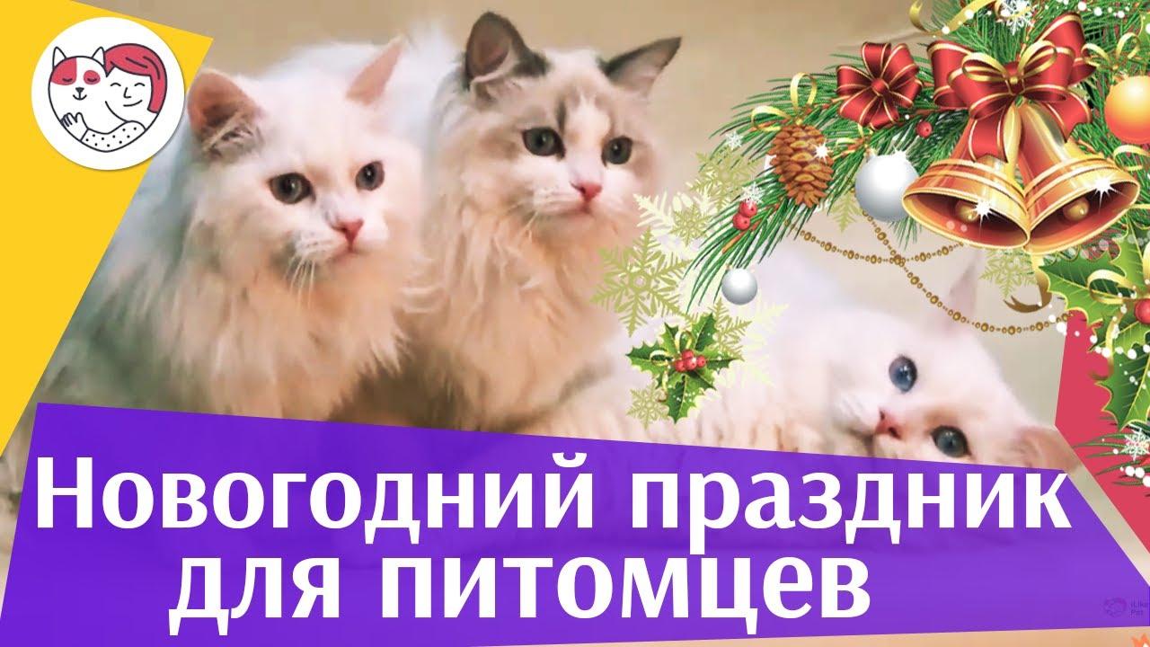 4 совета, как создать праздничное настроение питомцу под Новый год на ilikepet