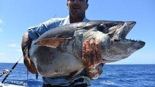 Fergo and Copsa-part 5 Coral Sea trip