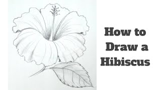 How To Draw A Hibiscus Flower Step By Step For Kids