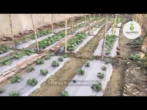 1400 Square foot Vegetable Garden at Khardah.