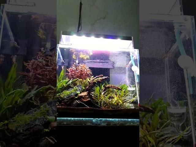 Nano aquascape sederhana...