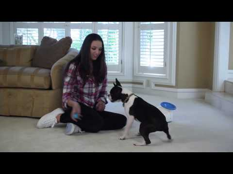 iFetch Original Interactive Dog Ball Launcher Video