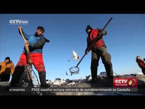 Cercatori di profondità sonici per inverno da pesca di estate