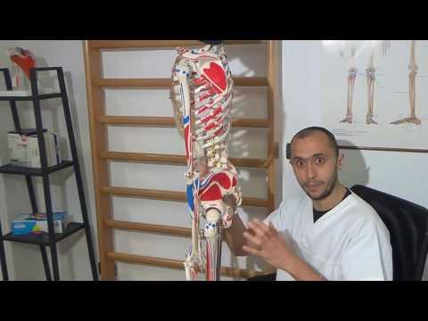 Il tutore sullarticolazione del ginocchio 601