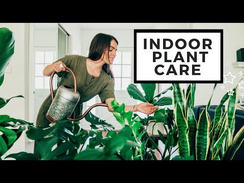 , title : 'How To Care For Indoor Plants | Best House Plants