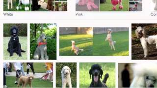 public domain images - how to google images search