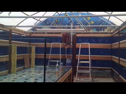 new tropical fish shop build, Final week catch up!!