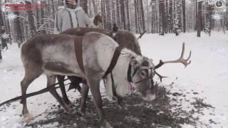 Уральская резиденция деда мороза 2016