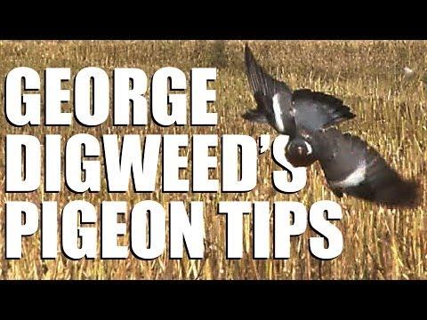 Fieldsports Britain – George Digweed's pigeon-shooting tips