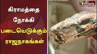 கிராமத்தை நோக்கி படையெடுக்கும் ராஜநாகங்கள் | Snake