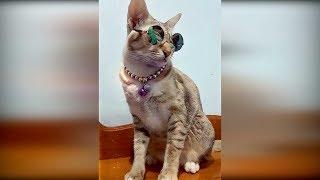 Приколы с животными 2019#25 Смешные видео про кошек 2019, видео про котов до слёз смешные кошки 2019
