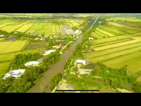 Vùng lúa trên đất tôm ở Phước Long, Bạc Liêu