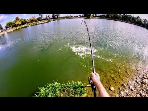 La pesca in un taiga di video del 2015