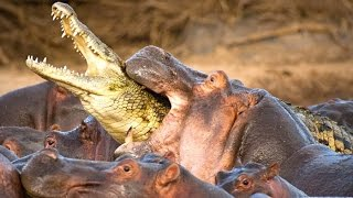 Top 10 Deadliest Animals On The Planet