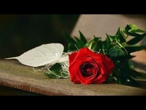 【 薔薇色の人生 】 五月みどり&渥美二郎 COVER 女性パート