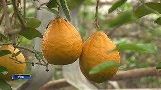 Из-за ошибки в документах Уфимский лимонарий оказался под угрозой закрытия