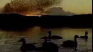 15. Gli Uccelli, de Franco Battiato