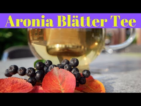 ☕️  Aronia Tee aus Aronia Blättern reich an Antioxidantien ✔️