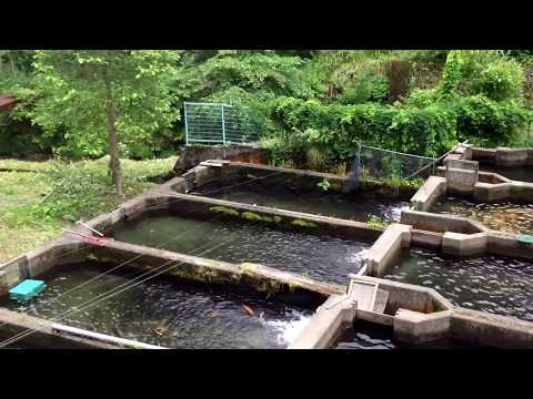 futuristic fish farm download foundupscom japanese mountain fish farm3gp mp4