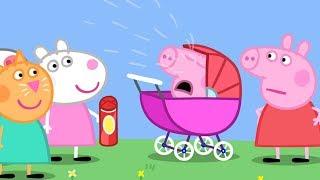 Peppa Pig en Español Episodios completos -  Bebé George | 1 Hour - Dibujos Animados